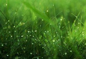 роса, зелень, трава, капли