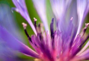 flash of summer, цветок, липестки