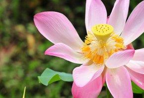 цветок, красивый, пестик, желтый