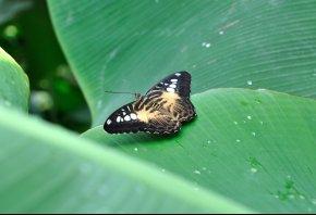 бабочка, листик, зеленый