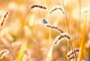 Обои бабочка, природа, лето