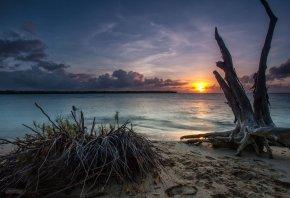 закат, море, песчанный берег, коряга