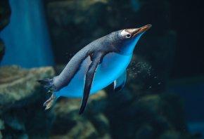 вода, пингвин, скалы, океанариум