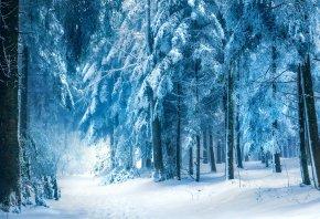 лес, зима, природа