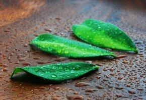 листья, зеленые, капли, лежат