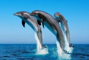 дельфины, прыжок, вода, океан