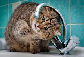 Кот, кран, раковина, ванная комната, зеленая плитка