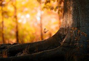 лес, дерево, бабочка, природа, осень