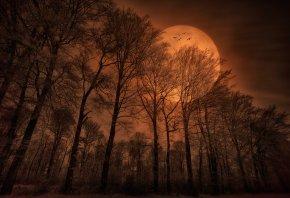 природа, лес, вечер, луна, птицы
