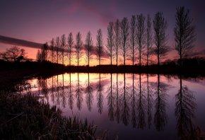 деревья, англия, великобританя, ряд, вечер