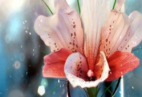 розовые лепестки, капли, лилия