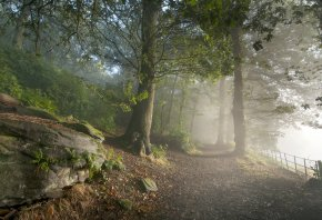 лес, свет, Дорога, природа, туман