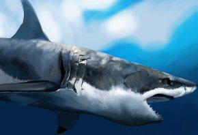 пасть, акула, под водой, зубы