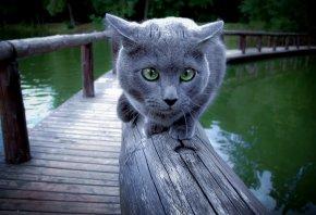 кошка, перила, вода, мост