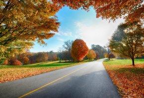 дорога, осень, пейзаж, листья, деревья