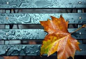 Обои лист, скамья, макро, вода, капли