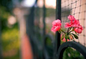 макро, забор, цветы