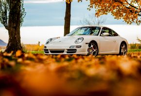 Porsche, 911, white, autumn, tree, foliage, sky, �����, 911, �����, �����, ������, ����