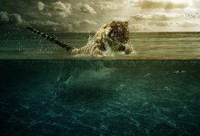 Обои рыбы, прыжок, вода, Тигр