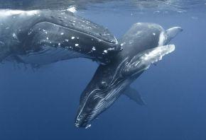 whale, море, природа, киты