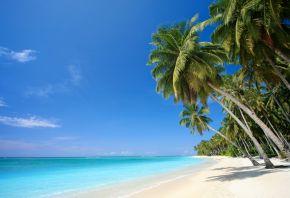 Обои пальмы, море, песок, тропики, пляж