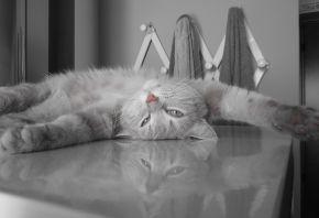 кот, серый, пушистый, отдыхает