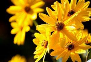 цветы, желтые, красивые, букет