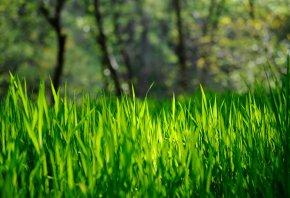 зеленая, Трава, весна, лето