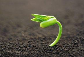 росток, зеленый, земля, макро