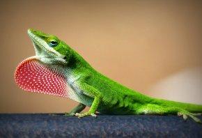 ящерица, зеленая, природа, фон