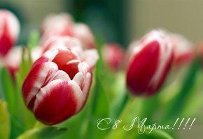 Обои цветы, тюльпаны, 8 марта