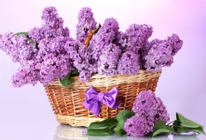 сирень, корзина, весна, бант, фиолетовый