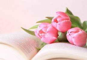 Обои цветы, тюльпаны, розовые, книга