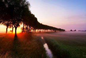 ручей, деревья, рассвет, лучи, туман, трава