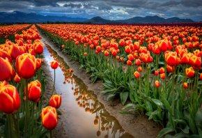 Обои Небо, горы, облака, вода, поле, канава, тюльпаны