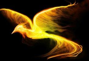 птица, феникс, огонь, крылья, полет, черный фон
