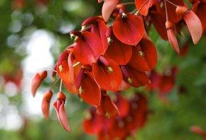 растение, цветение, красное, лепестки
