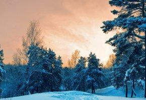 лес, снег, закат, розовый, деревья