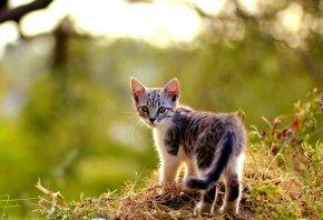 Обои котенок, трава, листья, осень