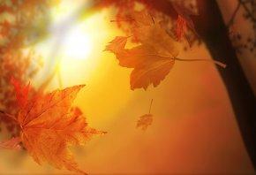 осень, листья, желтые, летят