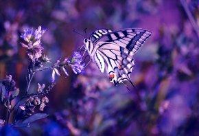 бабочка, цветок, растения, макро, цвет, сиреневый, фиолетовый