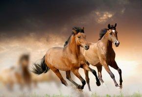 кони, лошади, бег, трава, облака
