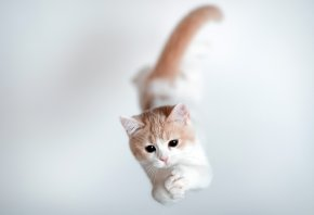 кот, котенок, прыжок, лапы
