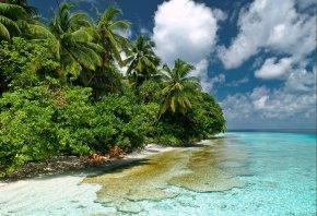 природа, мальдивы, индийский океан, море, вода, прозрачность, небо, пальмы, кусты