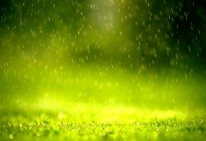 Зелень, дождь, уторо, хорошая погода, дитальи
