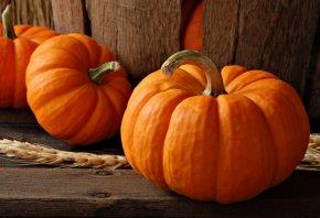 пшеница, еда, овощи, колос, осень, Тыквы
