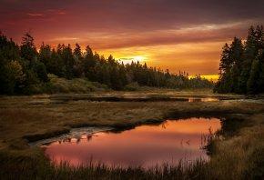 закат, озеро, лес, небо, трава