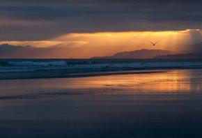 берег, пляж, побережье, море, океан, вечер, закат, небо, тучи, птица