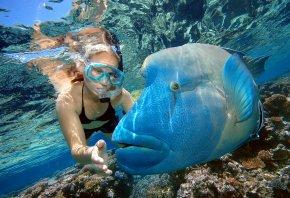 дайвинг, рыба, большая, вода, океан, кораллы