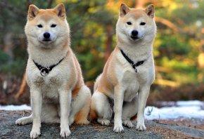 Обои собаки, две, друзья, фон, сидят